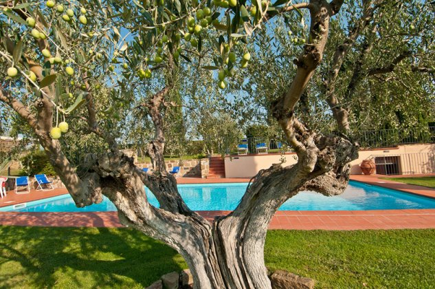 Photo n°114884 : luxury villa rental, Italy, TOSCHI 1067